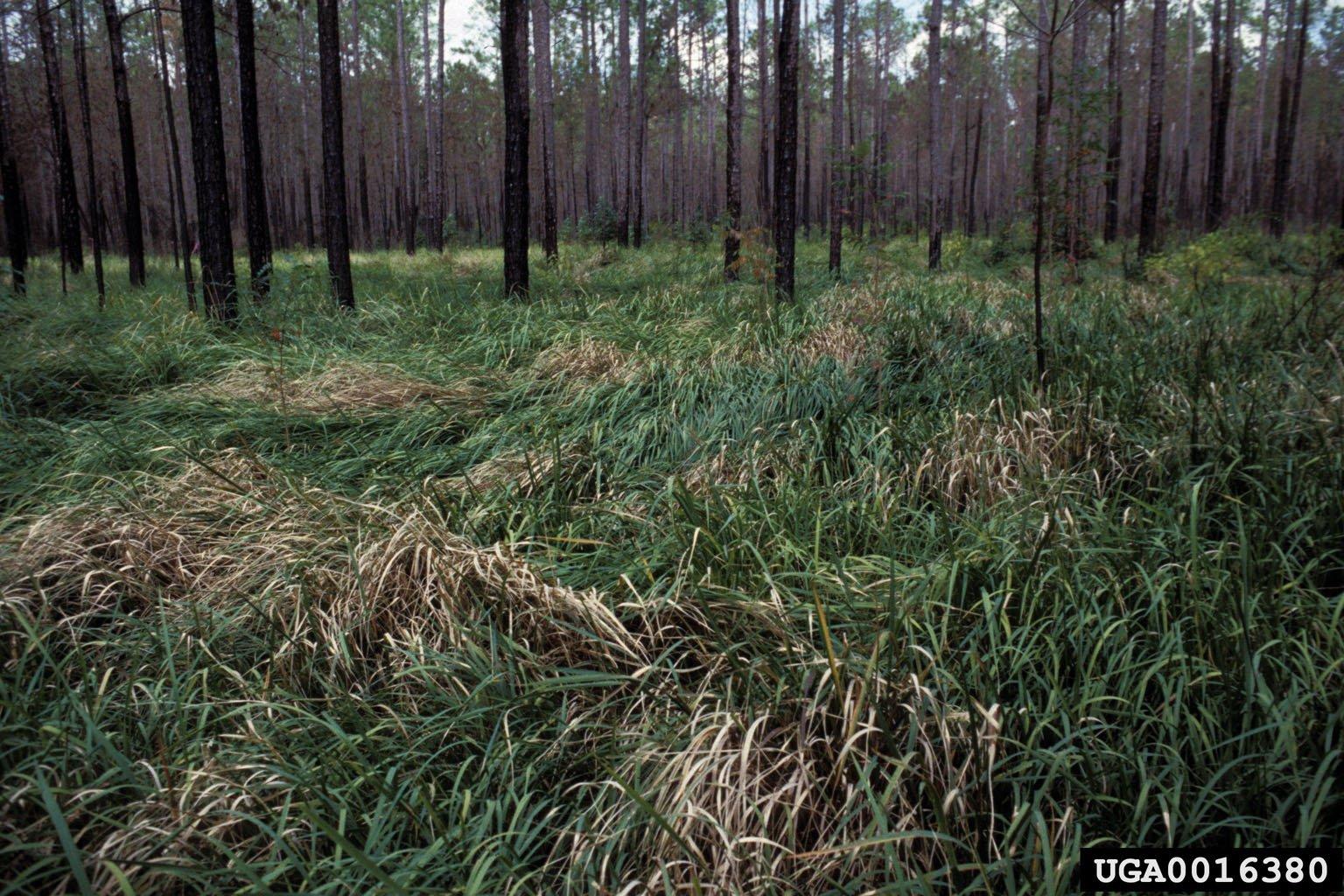 cogon grass leaning mat