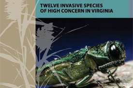 twelve invasive species booklet
